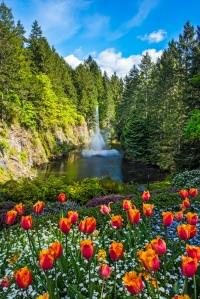 Buchart Garden tulips