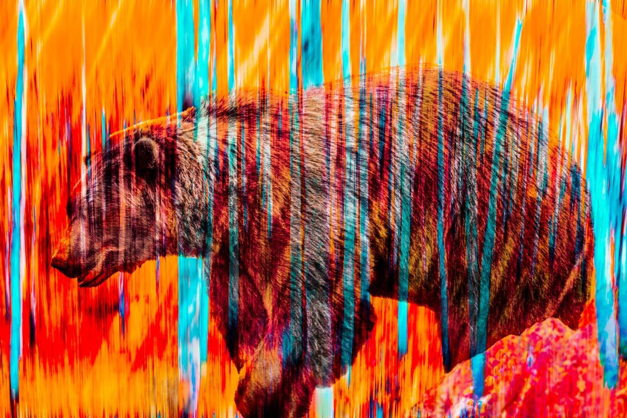 Vanishing orange bear Digtal Composite