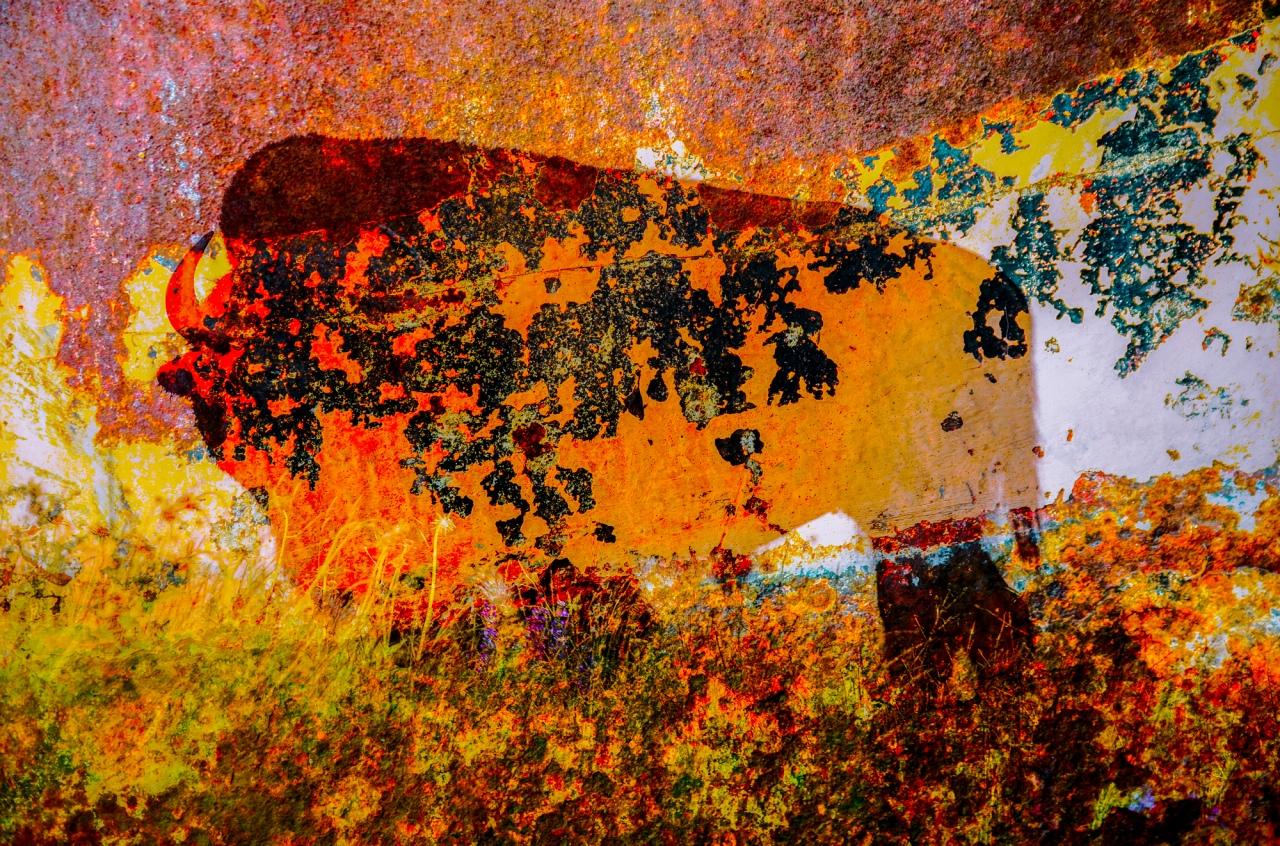 Vanishing Buffalo Digtal Composite