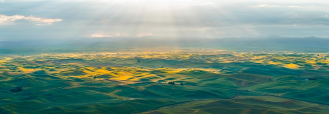 wheat fields sunrise (1 of 1)