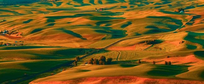 wheat fields sunrise 3 (1 of 1)