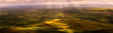 wheat fields sunrise 5 (1 of 1)-3